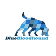 Blue Bloodhound