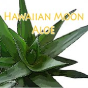 Hawaiian Moon Aloe